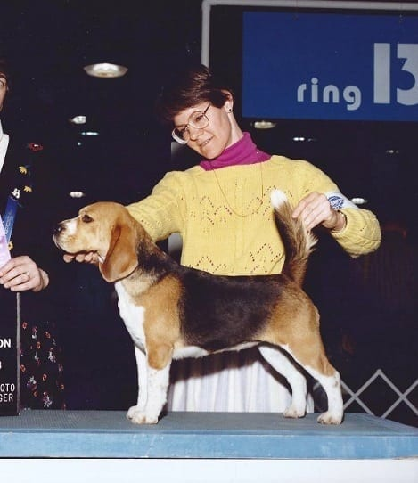 An Indianapolis woman inspects a beagle during the Indiana dog show