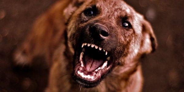 Lebanon Man Mauled in Dog Attack