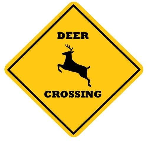 Road safety & Deer